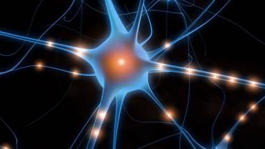 I neuroni allo specchio e la comparsa del linguaggio