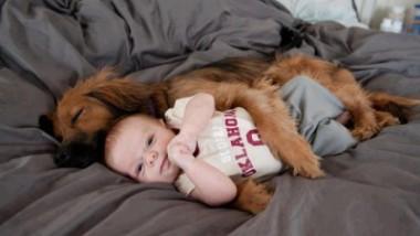 Un cane dà la felicità
