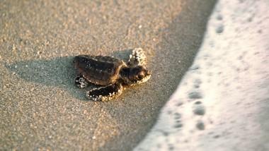 Tartarughe da vicino