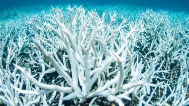 Il futuro della barriera corallina australiana
