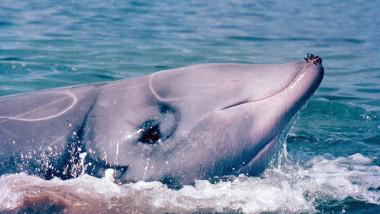 La balena di plastica