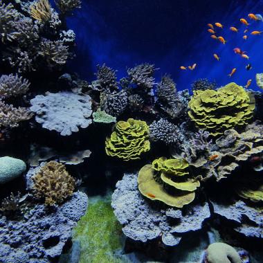 Conoscere, amare e proteggere l'oceano
